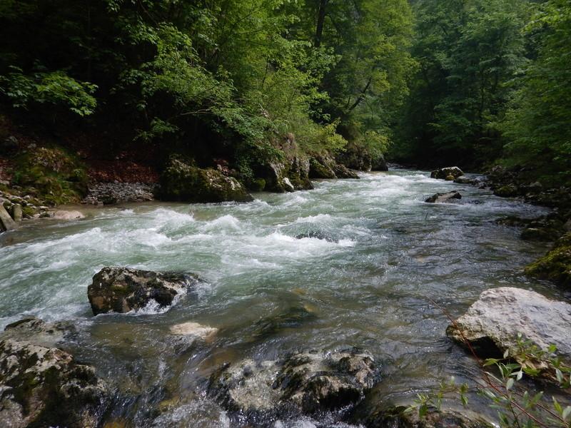 De l'eau et des truites ! Dscn3115