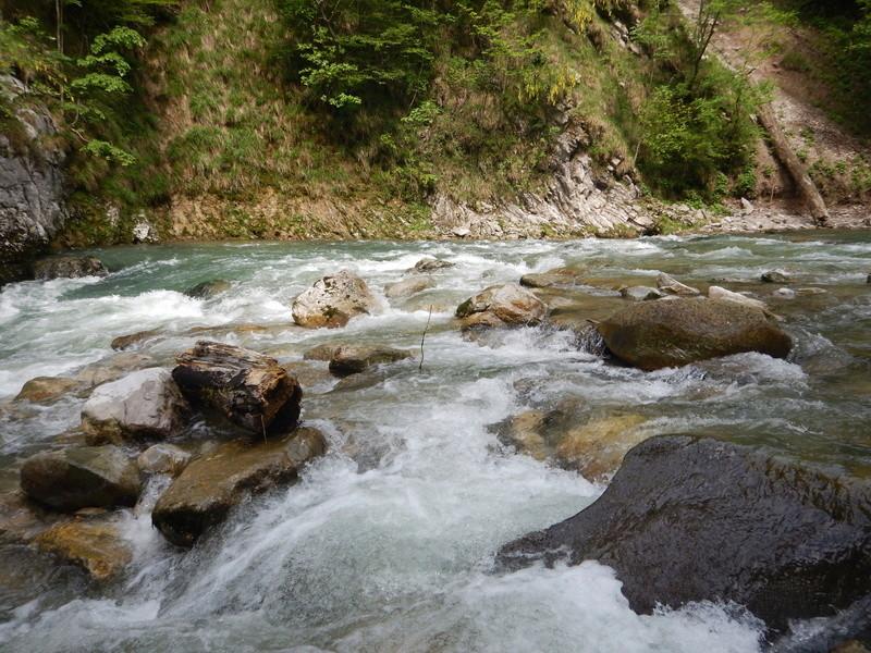 De l'eau et des truites ! Dscn3119