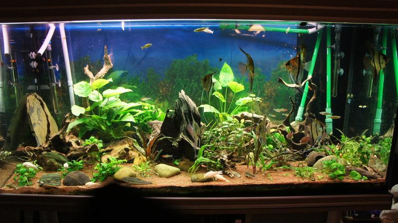 Mes poissons respirent en surface, Pourquoi? 17-12-10
