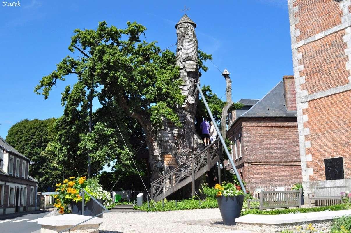 Le chêne millénaire d'Allouville-Bellefosse - Seine Maritime - France Chc3aa10