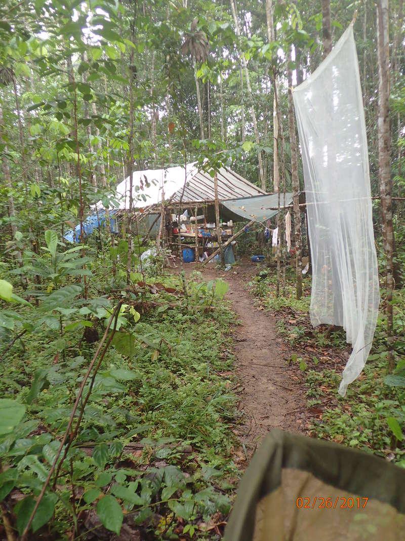 Bonjour de Guyane P2260110