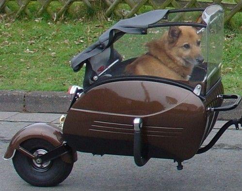 comment transporter mon chien (labrador) 950f9a10