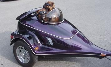 comment transporter mon chien (labrador) Asuv3410