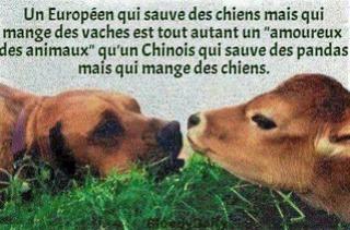 honte aux suisses 17362610