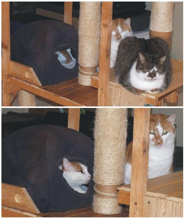 L'arbre à chats est adopté... Arbre_10