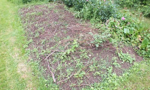Comment éloigner les chats de son jardin ? Branch11