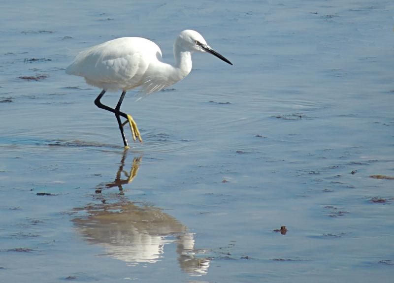 les oiseaux et petites bêtes au cours de nos balades 49905910
