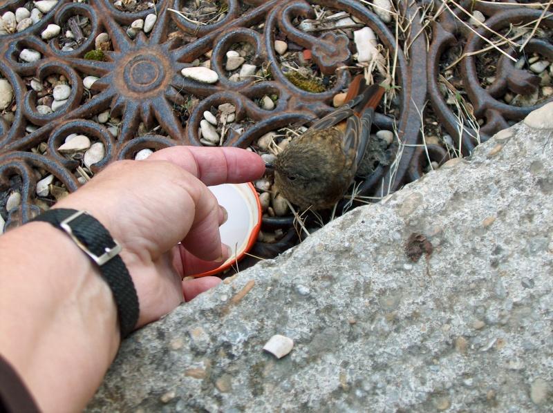 les oiseaux et petites bêtes au cours de nos balades 56948510
