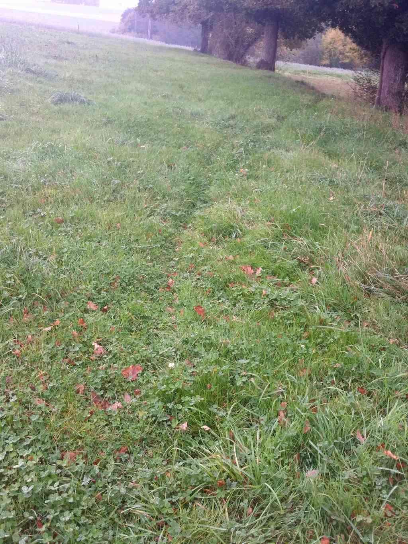 traces dans les herbes et fientes 20171114