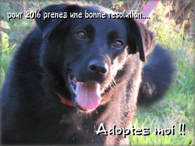 FLASH (refuge de Backa) mâle  type labradorné en 2009 adopté par Claire en 2016 11214710