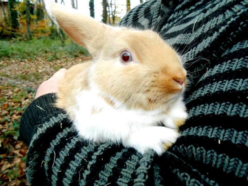 Chevreaux, poules, lapins.... 12313910
