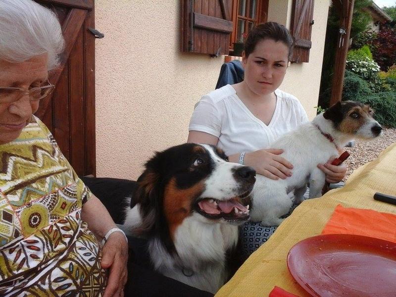 HELIE fem. croisée Jack Russel née le 10/02/2012 adoptée le 12 Juin 2016 par Ginette 13532810