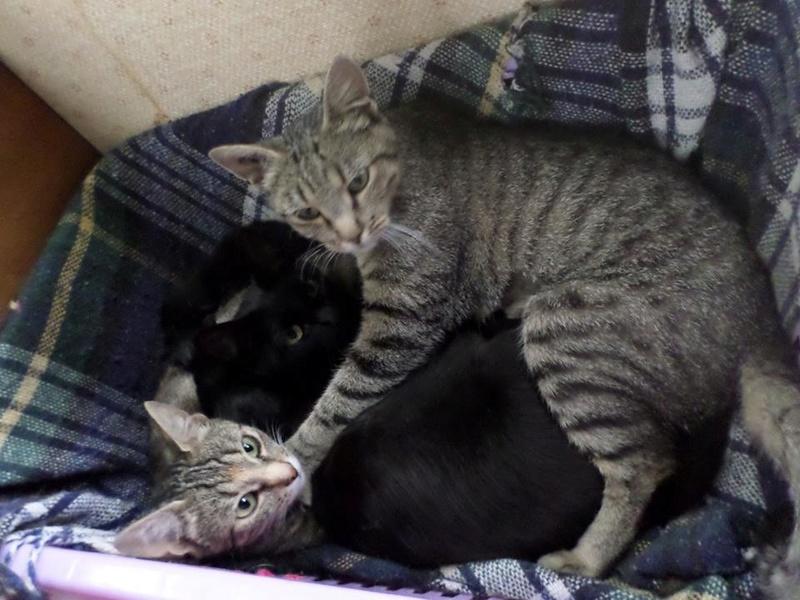 Sauvetage d'une famille de chats Septembre 2016. Une drôle de petite famille. 14317610