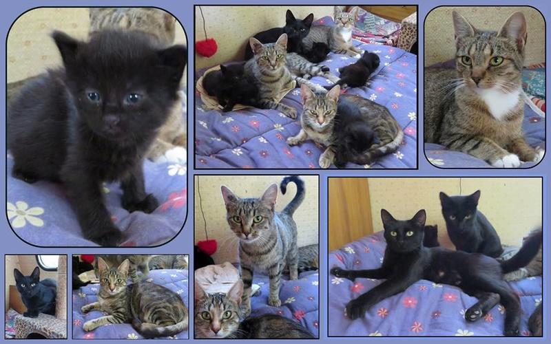 Sauvetage d'une famille de chats Septembre 2016. Une drôle de petite famille. 14502810