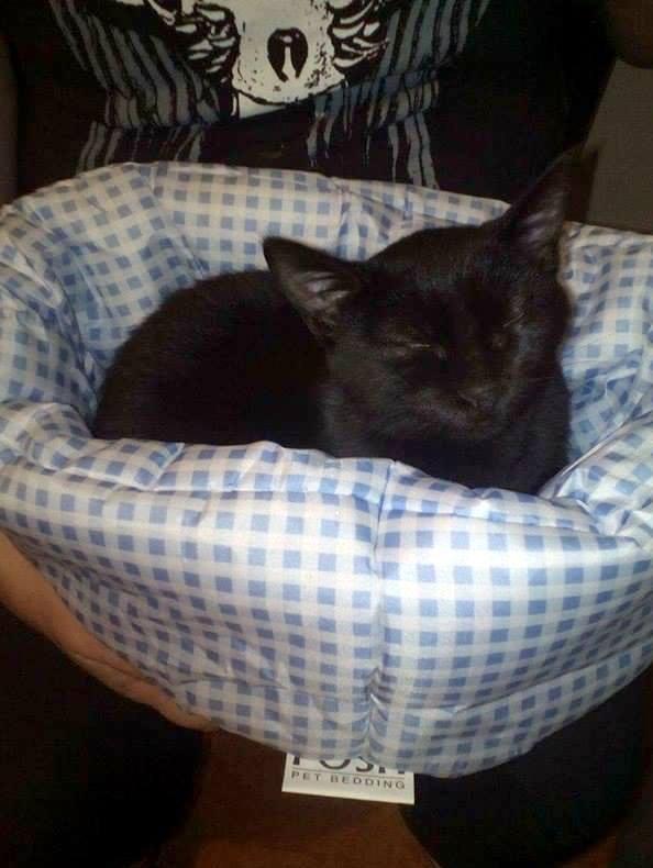 MIA, devenue NYMERIA chat femelle noire Née fin mai 2016 adoptée en Novembre 2016 par Esthel 14962710