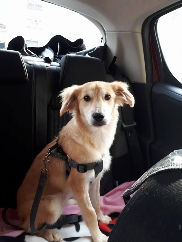 Leetchi. (fourrière de Piatra Neamt) femelle de race croiséé née le 24 Avril 2017 Adoptée par Nadia en Janvier 2018 22007310