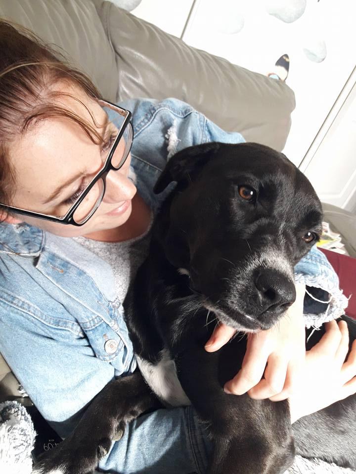FIFI, femelle croisée labrador née en Mai 2016 Adoptée par Noémie en 05/2018 22308510