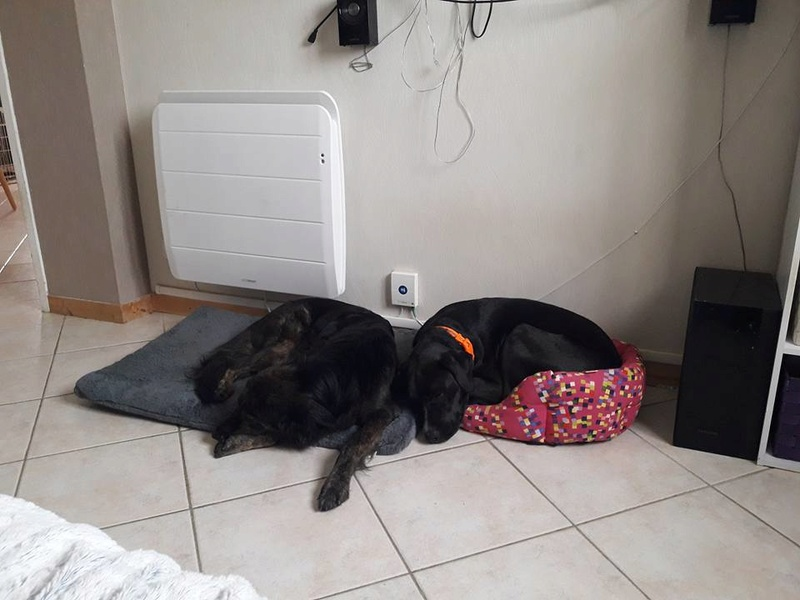 FIFI, femelle croisée labrador née en Mai 2016 Adoptée par Noémie en 05/2018 22308910