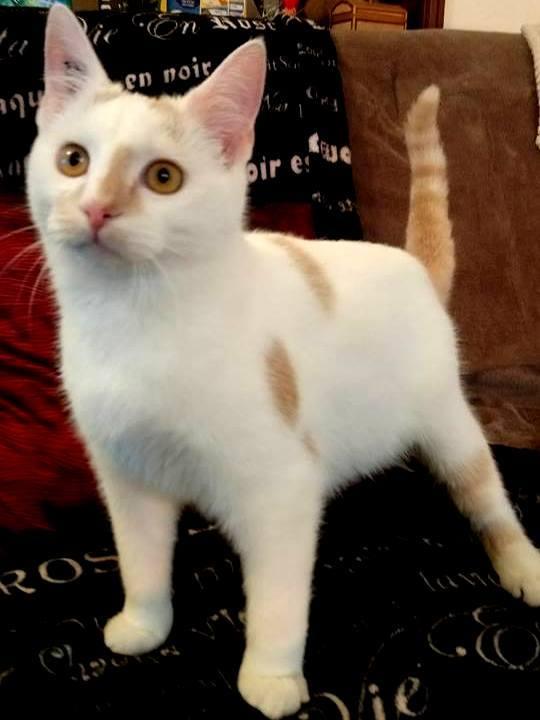 NEIGE chat mâle né le 01/07/2017  adopté en Janvier 2018 par Fabienne 26169110