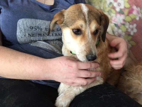 MARCO ( ex chien n°13 refuge de Sitia) mâle croisé né le 25/08/2017   Non adoptable trop craintif  27498010