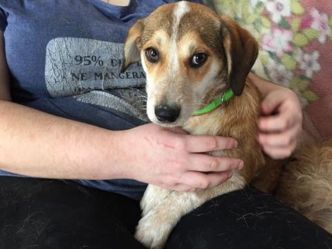 MARCO ( ex chien n°13 refuge de Sitia) mâle croisé né le 25/08/2017   Non adoptable trop craintif  27498110