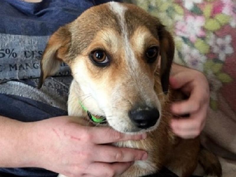 MARCO ( ex chien n°13 refuge de Sitia) mâle croisé né le 25/08/2017   Non adoptable trop craintif  27658911
