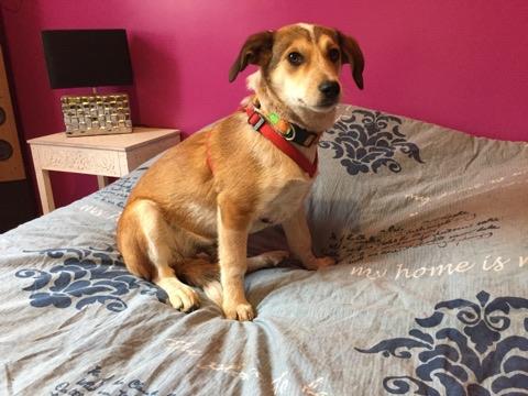 MARCO ( ex chien n°13 refuge de Sitia) mâle croisé né le 25/08/2017   Non adoptable trop craintif  27718211