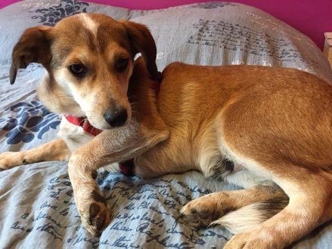 MARCO ( ex chien n°13 refuge de Sitia) mâle croisé né le 25/08/2017   Non adoptable trop craintif  27783110
