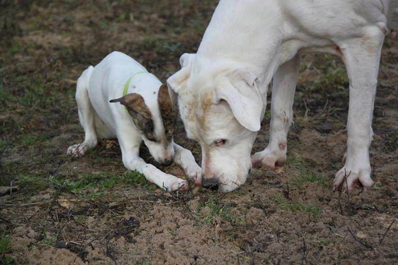 PLUME (ex Naya Chiot n°5 refuge de Sitia) Femelle née le 25 Aout 2017. Adoptée par El Thibout en Février 2018 27857810