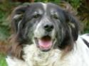 Nos Séniors en panier retraite ou animaux avec un handicap. Soins  pris en charge par l'association. P1010411