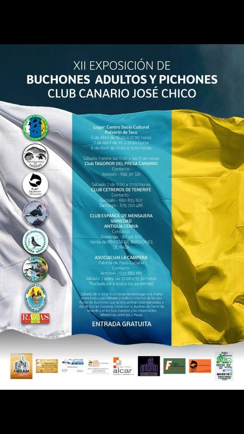 Foro gratis : Club Canario de Buchones José Chico - Portal 28954310