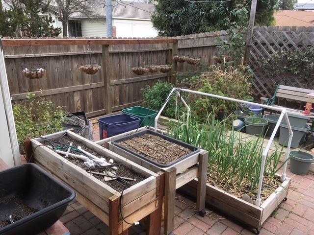 Sanderson's Urban SFG in Fresno, California Garden27