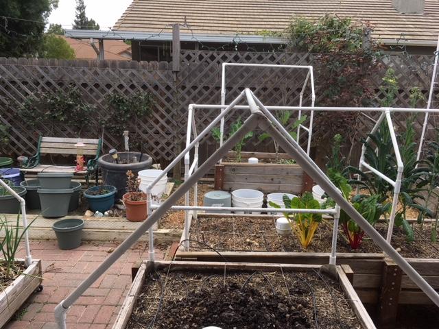 Sanderson's Urban SFG in Fresno, California Garden28
