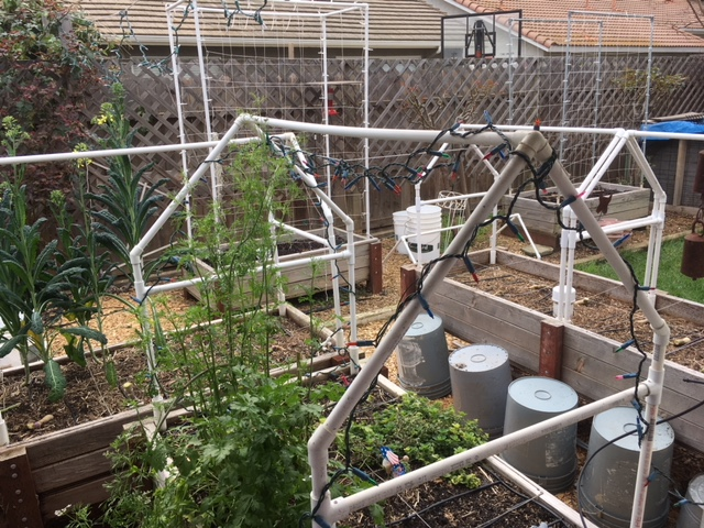 Sanderson's Urban SFG in Fresno, California Garden29