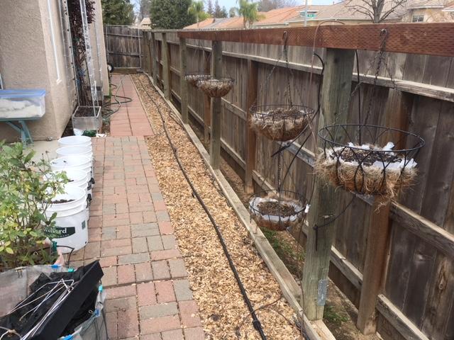 Sanderson's Urban SFG in Fresno, California Garden31