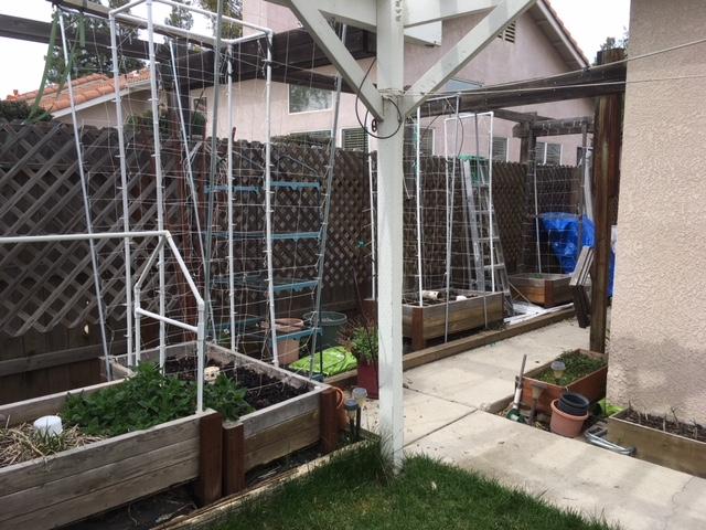Sanderson's Urban SFG in Fresno, California Garden32