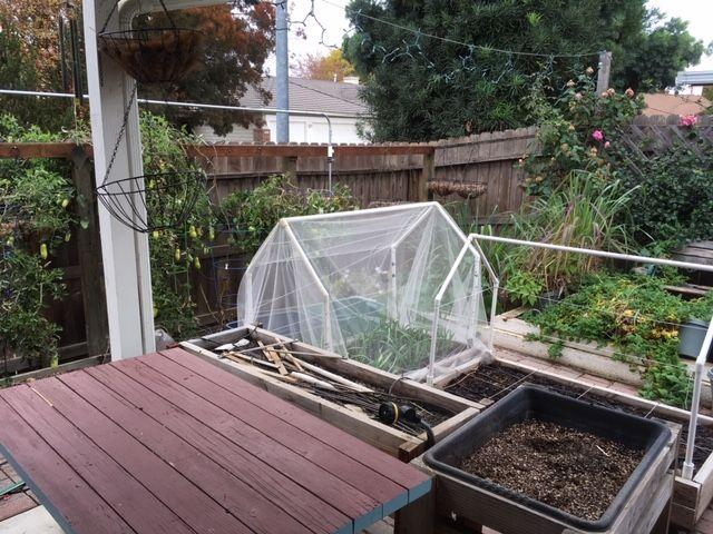 Sanderson's Urban SFG in Fresno, California - Page 5 Garden54