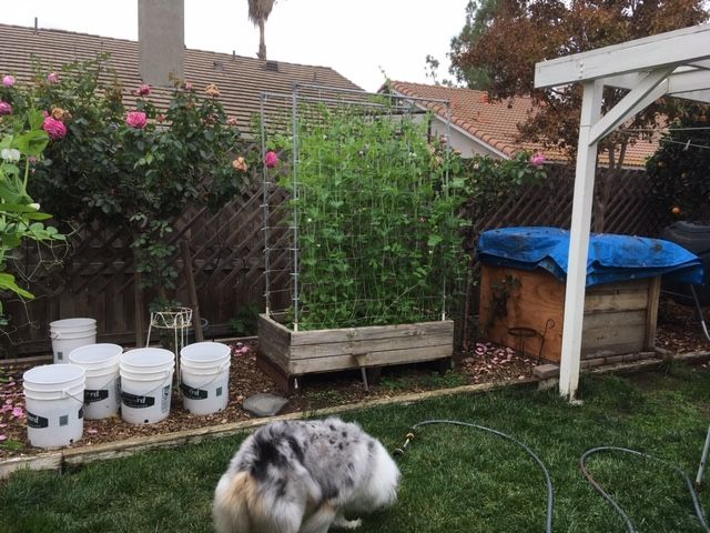 Sanderson's Urban SFG in Fresno, California - Page 5 Garden57