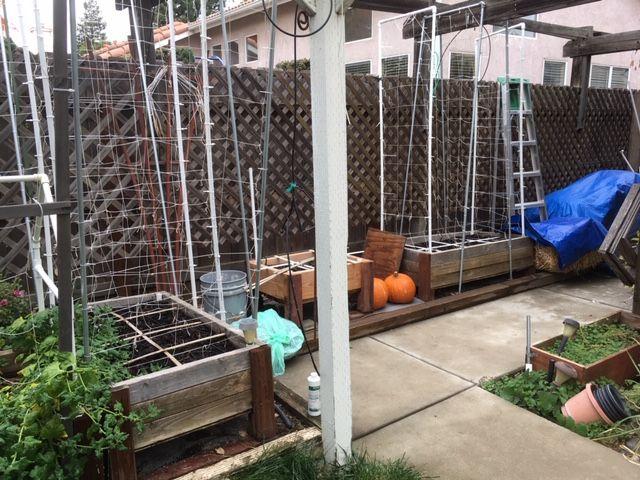 Sanderson's Urban SFG in Fresno, California - Page 5 Garden58