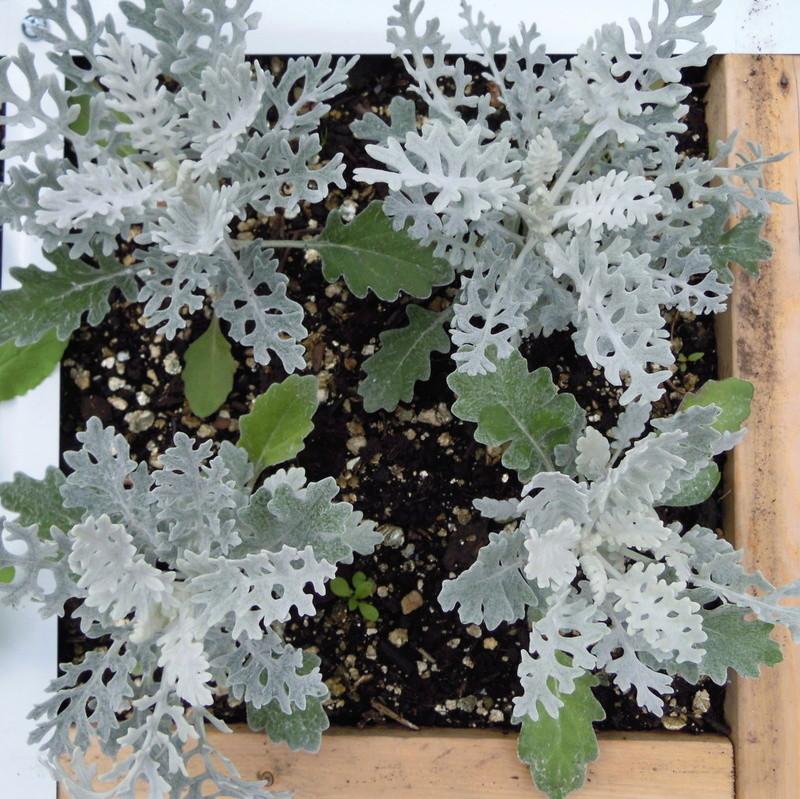 Spacing of plants Planti10