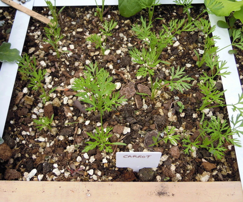 Spacing of plants Planti16