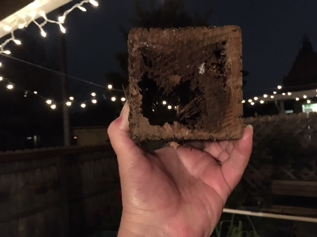 Termites in Treated Wood Termit11