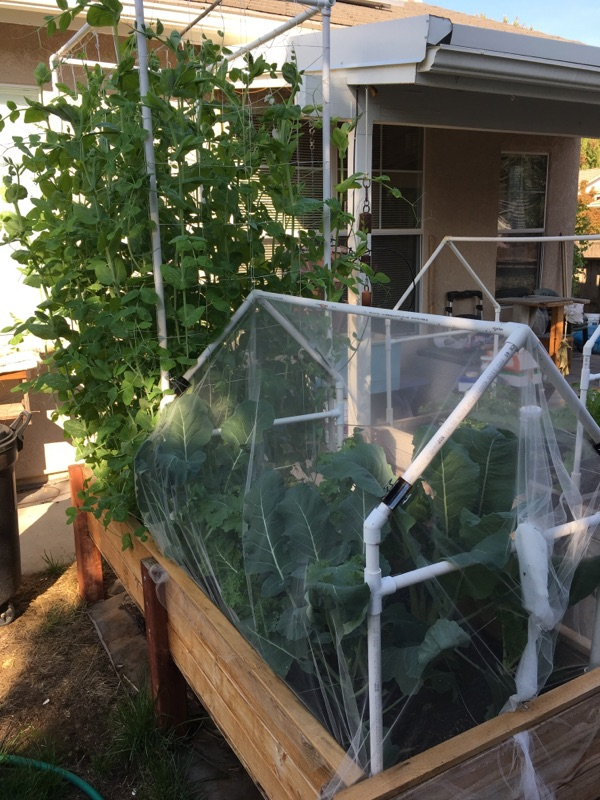 cold frame gardening question Winter17