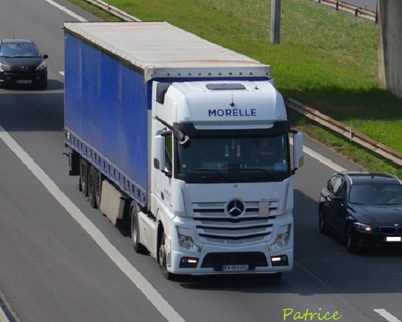 Morelle  (Haspres, 59) 6915