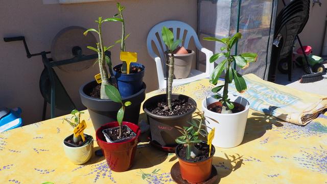 Mon jardin au commencement!  - Page 4 P4060910