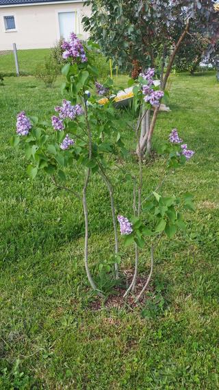 Mon jardin au commencement!  - Page 4 P4231015