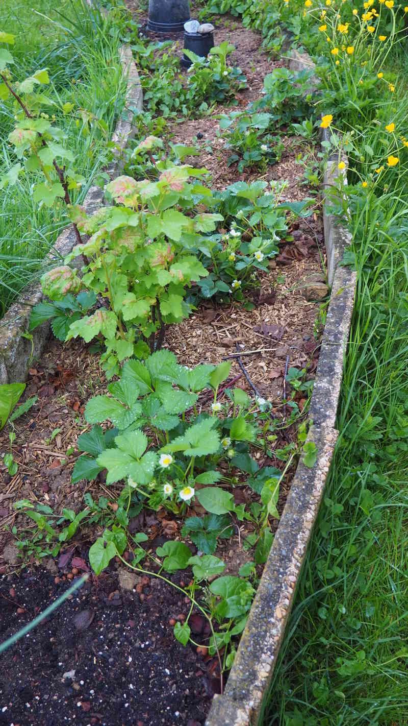 Mon jardin au commencement!  - Page 4 P4281115