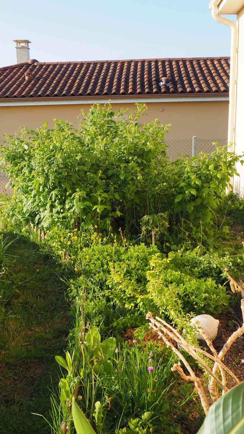 Mon jardin au commencement!  - Page 4 P5041110