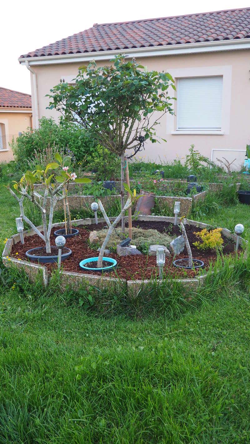Mon jardin au commencement!  - Page 4 P5061111