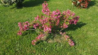 Mon jardin au commencement!  - Page 4 P5071114